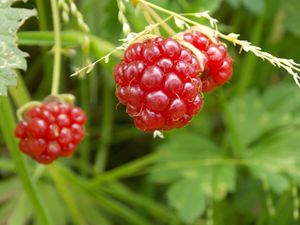 seasonal fruit.