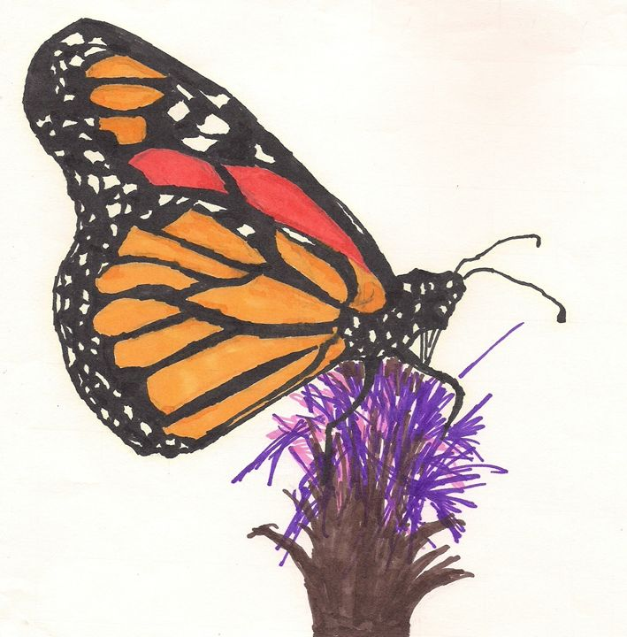 COLORFUL BUTTERFLY - Energetic