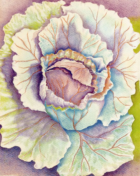 Colorful Cabbage - Christel Huttar