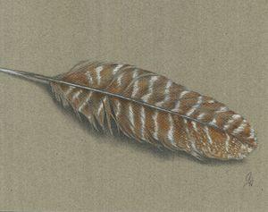 Turkey Feather - Christel Huttar