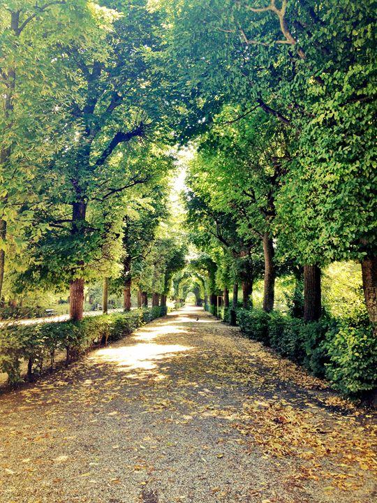 Schonbrunn Garden -  Chezsievers