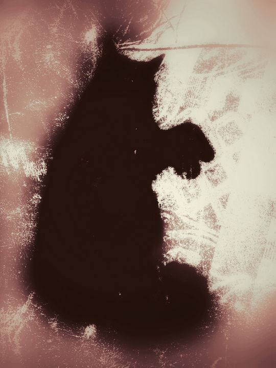 Cookie Cat - River Reynolds
