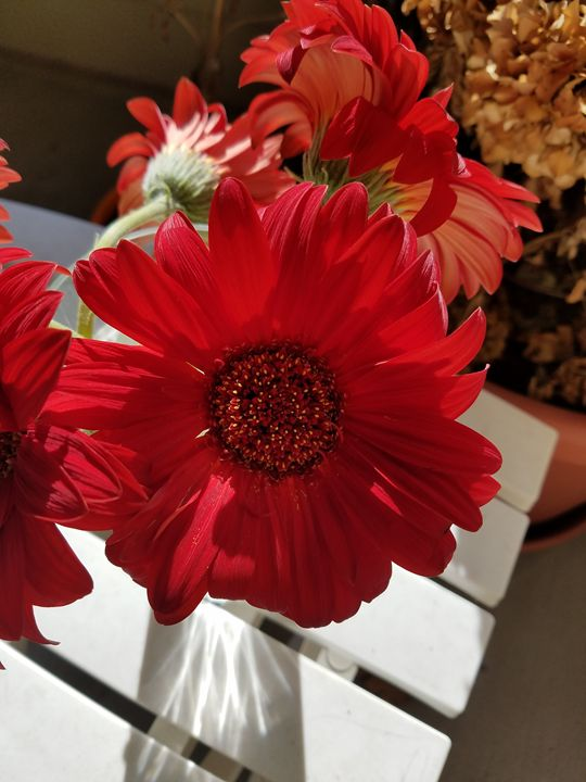 Flower - Brandy Medlin