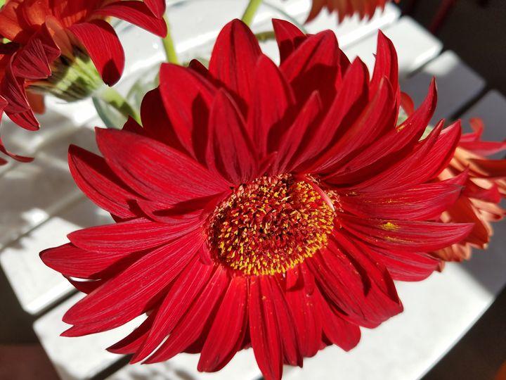 Flower_2 - Brandy Medlin