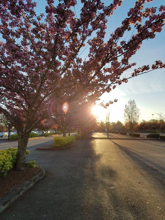 Cherry Blossom - Brandy Medlin