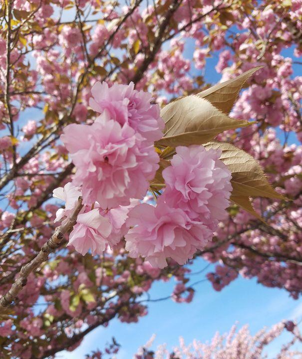 Blossom_2 - Brandy Medlin