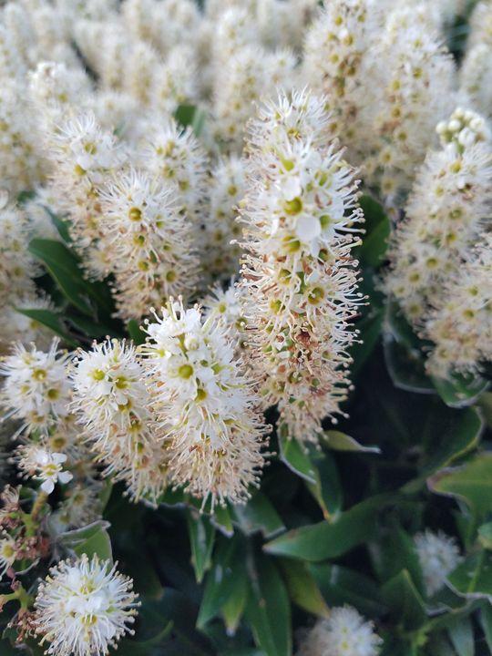 Blossom_3 - Brandy Medlin