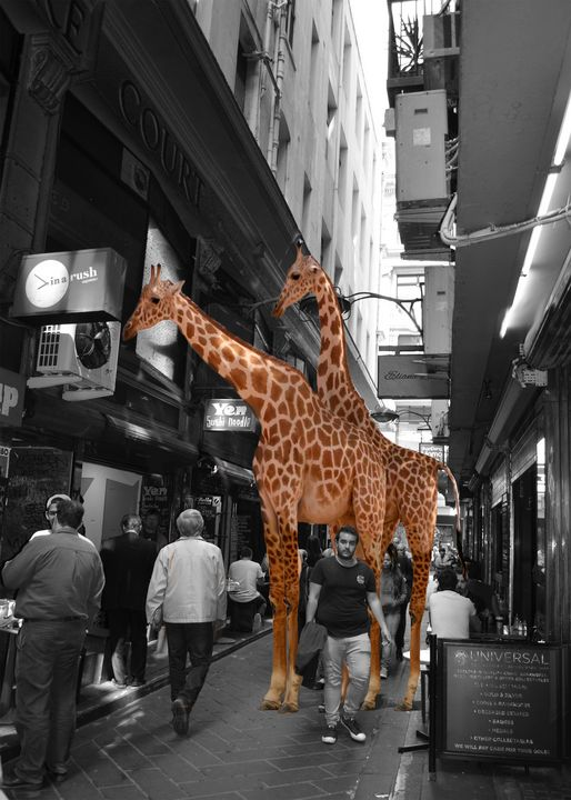 Melbourne Zoo - Tatyana Binovska Art