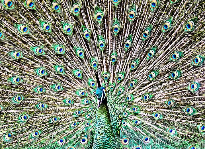 Peacock Pose - Millie Moo Photography