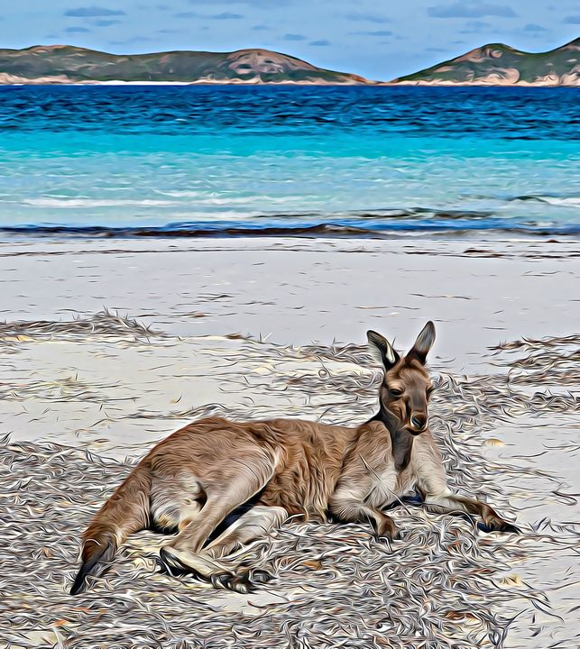 Kangaroo relaxing on Beach - Millie Moo Photography