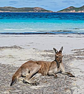 Kangaroo relaxing on Beach