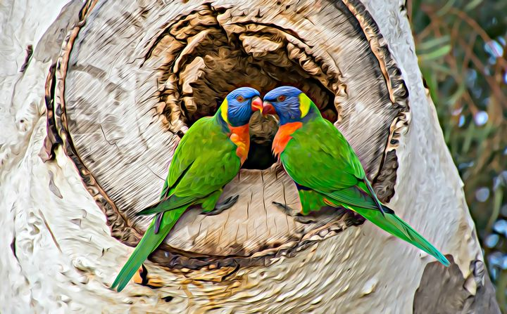 Rainbow Lorikeet Duo - Millie Moo Photography