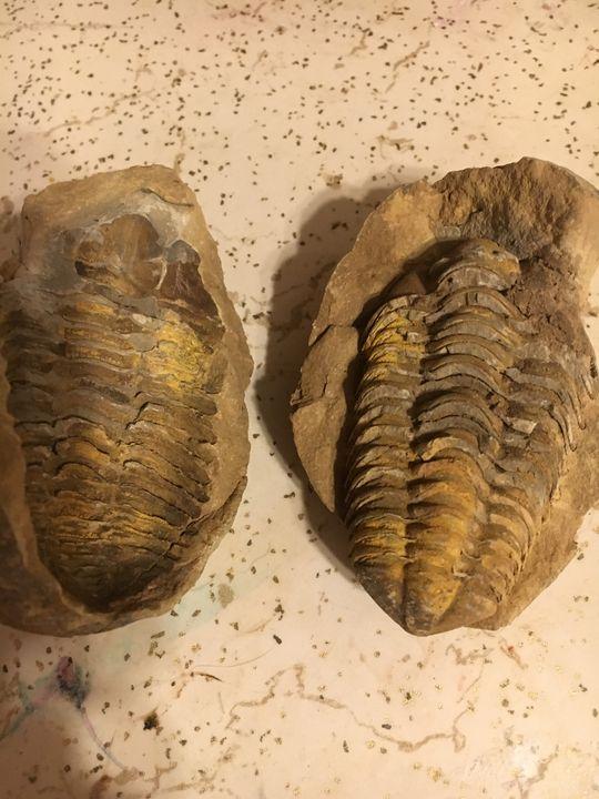 Trilobite fossil - KJ art