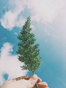 """""""Plant"""" in the Sky"""