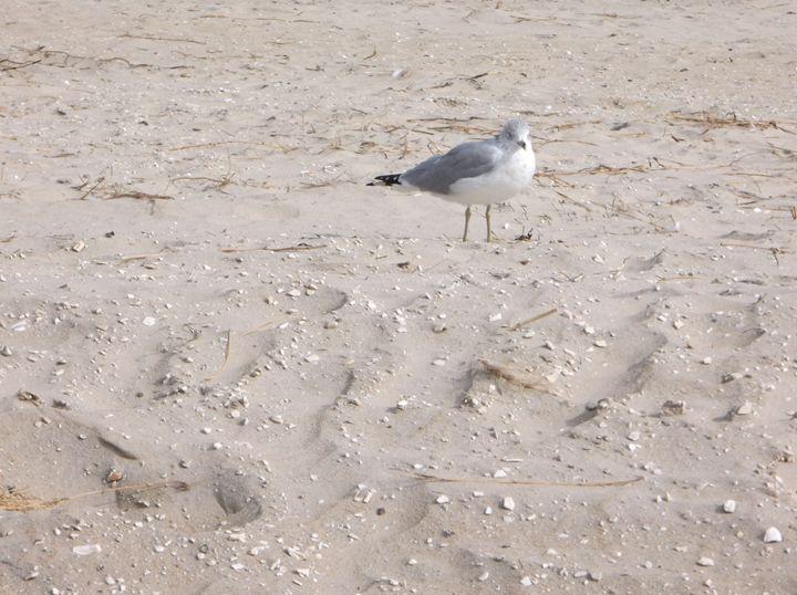 J L Seagull I presume - Ren's Lens
