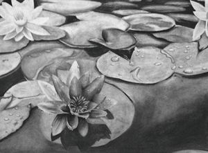 Pond with Water Lilies and Lily Pads