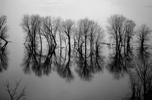 Mississippi River Reflections