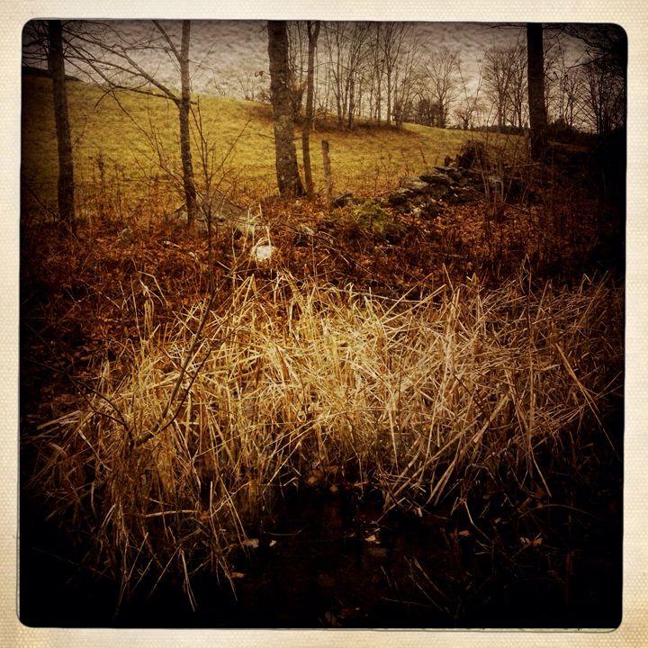 Fall Grasses - Peter Carini