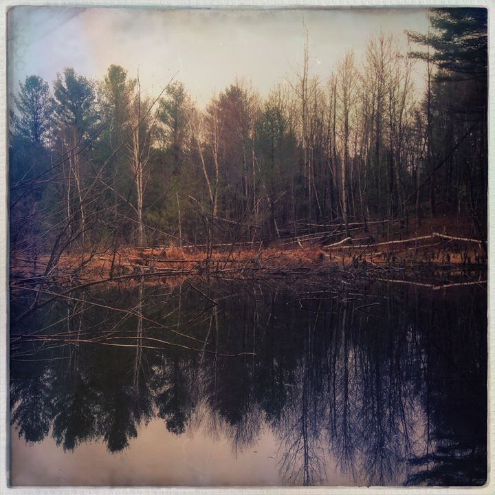 Beaver Pond Reflection - Peter Carini