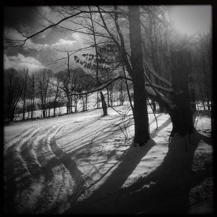Winter Track - Peter Carini