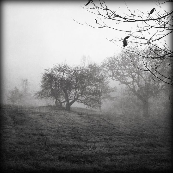 Orchard 1 - Peter Carini