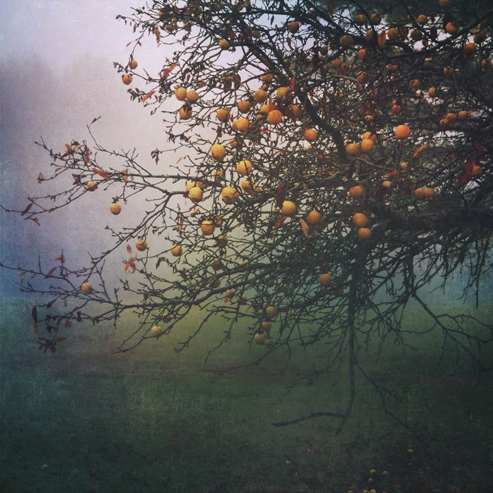 Late Apples - Peter Carini