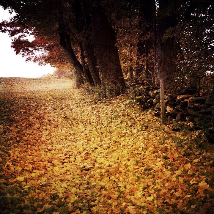 Fall's end - Peter Carini
