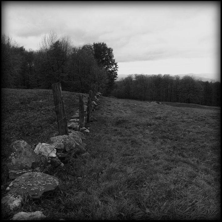 Fence Line - Peter Carini