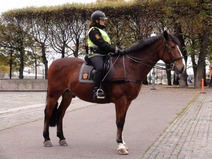 police on horse - Spomm