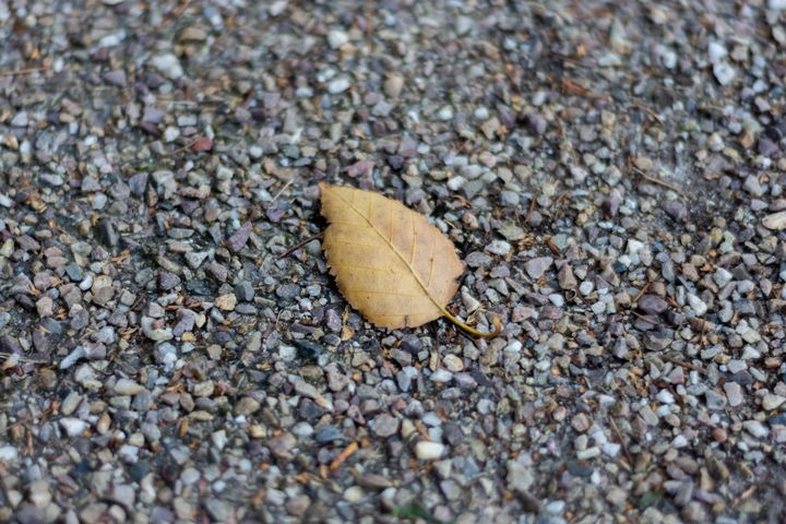 Brown leaf on gravel - S. Lyons Photography