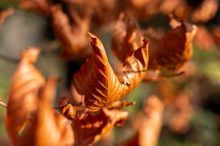 Dried Autumn Leaves - S. Lyons Photography