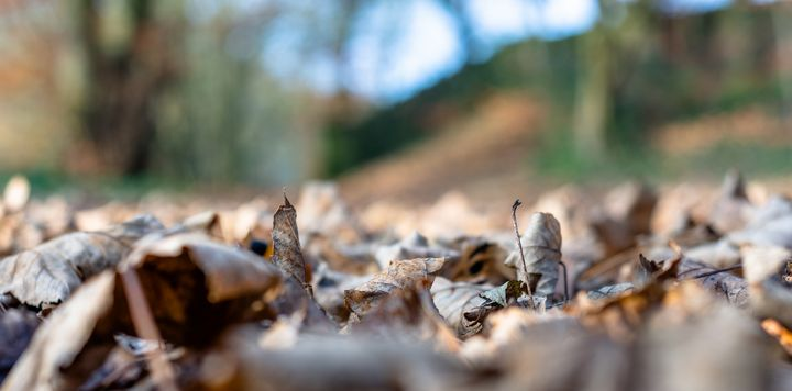 Dried leaves on the ground - S. Lyons Photography