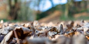 Dried leaves on the ground