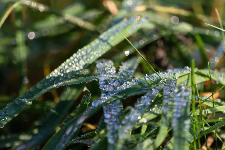 Morning dew on grass - S. Lyons Photography