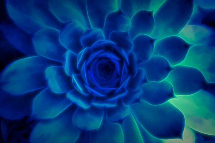 Neon Blue Sempervivum - S. Lyons Photography