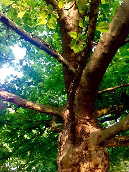 amazing tree - Maria