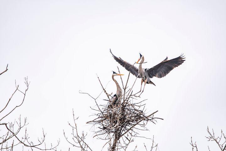 Feathering the nest - David Bearden