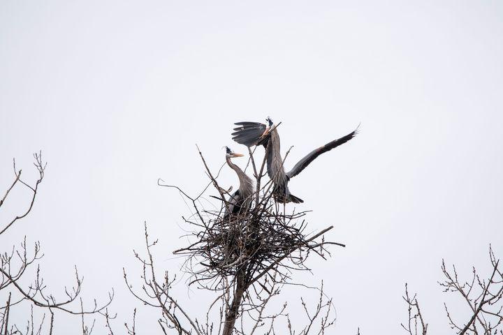 Heron Stick Exchange - David Bearden