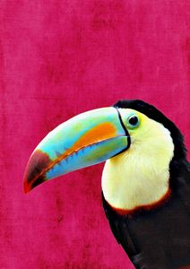 Toucan Picture, Tropical Birds Wall