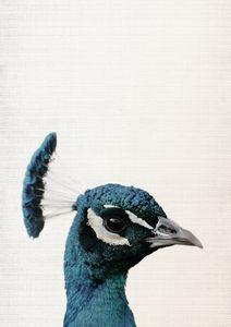 Peacock Print,Bird Art,Peacock Bird - Art Print Studio