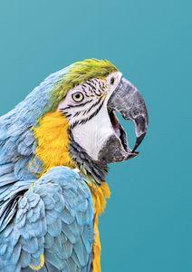 Parrot Artwork, Turquoise Bird Print