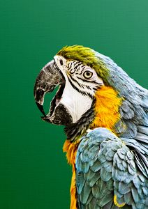 Macaw Parrot Print, Tropical Photo,