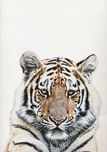 Tiger Print, Tiger Wall Art Decor