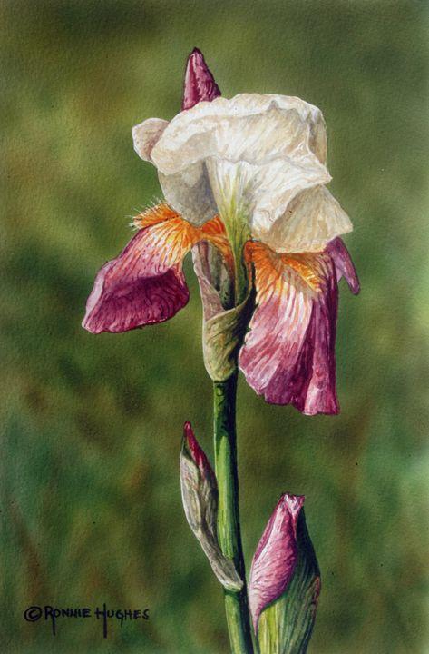 """Bearded Iris 1"" - Hughes Twins Art"