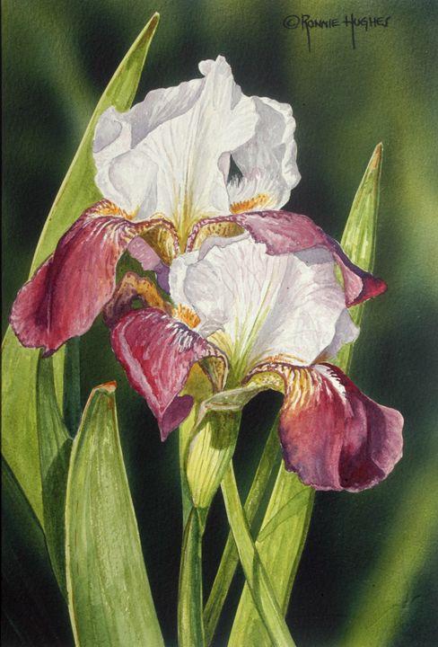"""Bearded Iris 2"" - Hughes Twins Art"