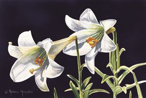 """Easter Lilies"""