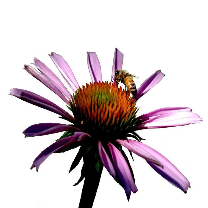 Daisy Bee - JonesArtWorkS