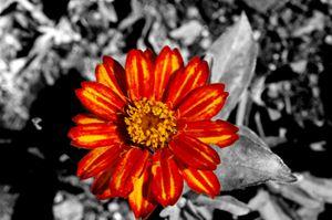 Red Flower - JonesArtWorkS