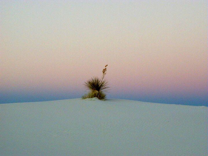 White Sands Yucca - JonesArtWorkS