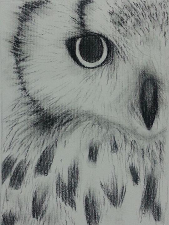 Owl - Sirena Foo